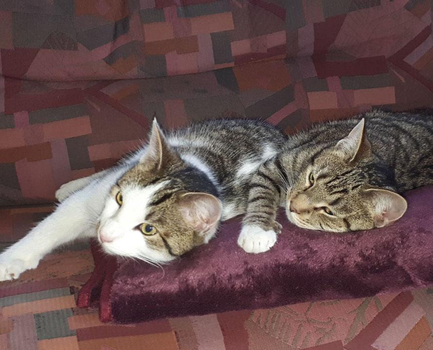 Zwei junge Kätzchen auf der Wolldecke auf dem Ferienhof Kunzog