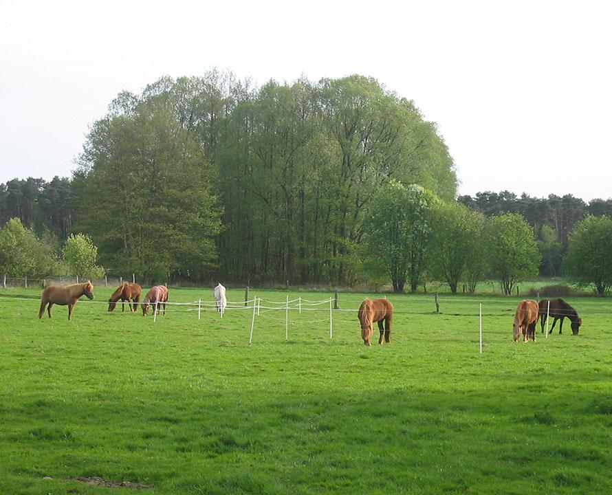 eine Gruppe Gastpferde steht auf der Weide und geniesst das saftige Grün