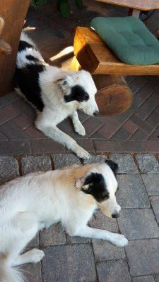 2 Hunde auf der Terrasse an der Holzbank